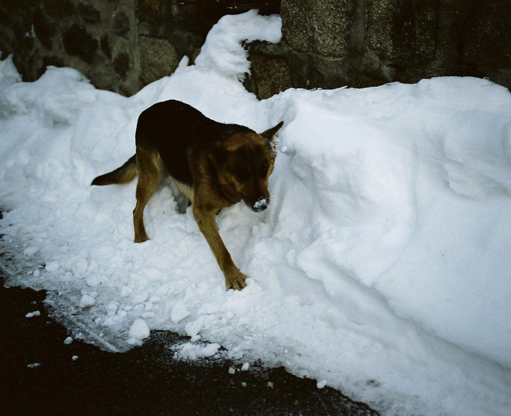N'aie pas peur du loup